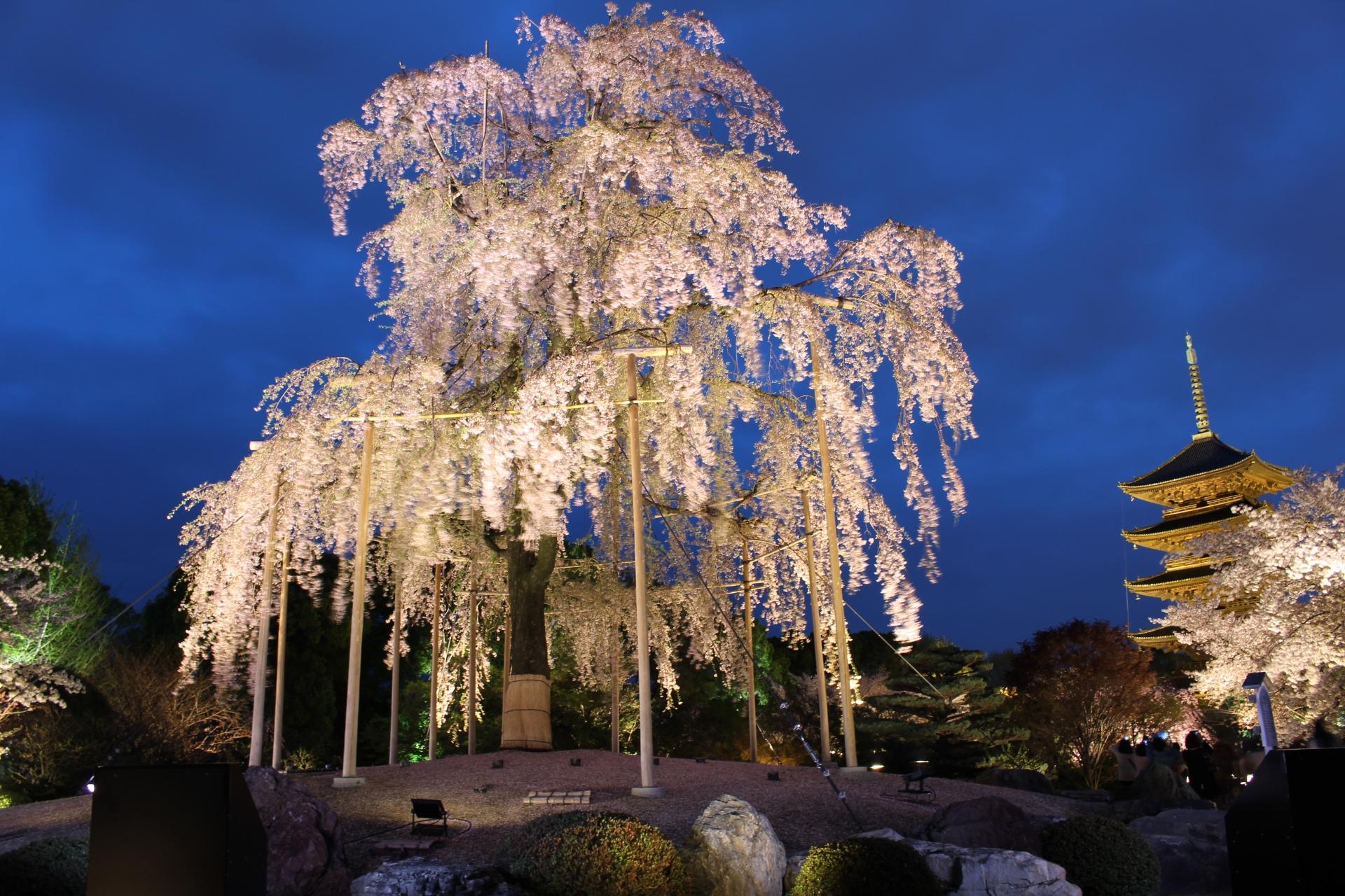 東寺の花見