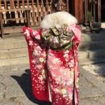 京都で振袖レンタルできるお店|成人式・結婚式・卒業式は振袖で華やかに