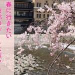 【最新】春に行きたい京都のデートスポット|モデルプランもご紹介