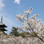 春の観光シーズン🌸営業時間延長のお知らせ!
