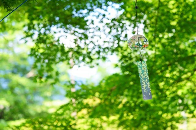 風鈴と若葉の、初夏の風景